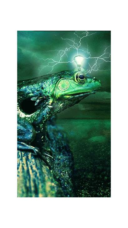 Artwork Canvas Spotify Visuals Moving Frog