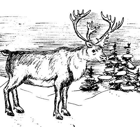 bull elk coloring pages   print