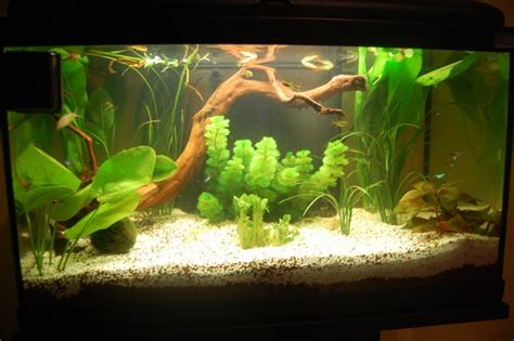 photo deco aquarium eau douce