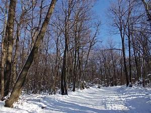 Winterwald, Schnee