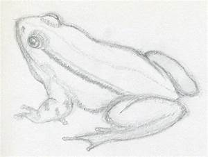 How To Draw A Frog ~ Jus 4 kidz