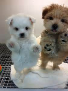 Cute Puppies Ever