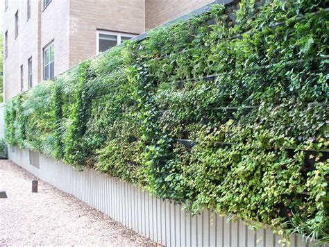 ideas for painting kitchen walls the guide to living green walls ambius greener on