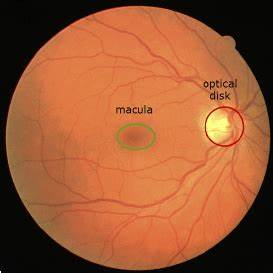 Retinal Image With Marked Macula And Optic Disk