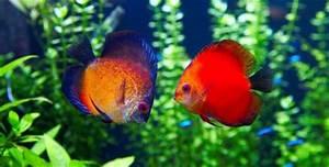 Aquaristik Warum So Viele Fische Im Becken Sterben