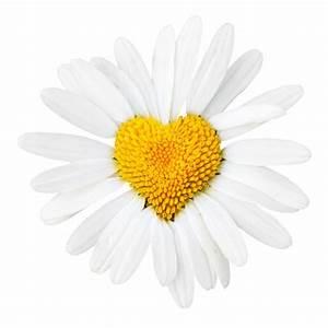 Aufbau Einer Blume : uncategorized elfbox 39 s grenzenloser b cherblog seite 3 ~ Whattoseeinmadrid.com Haus und Dekorationen