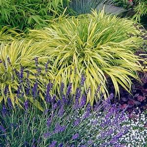 Plante Pour Jardin Japonais : quelles plantes pour fleurir son jardin en t ~ Dode.kayakingforconservation.com Idées de Décoration