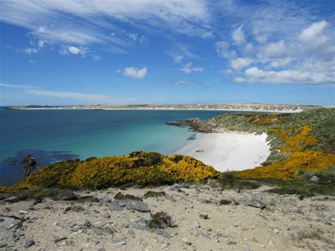 gypsy cove poucos pinguins picture of gypsy cove stanley tripadvisor