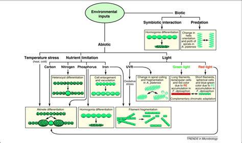 determining cell shape adaptive regulation