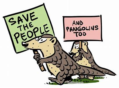 Pangolins Wait Save Too Months Cartoons