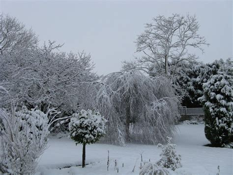 garden  winter showing  stark outlines winter