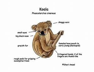 About Koala