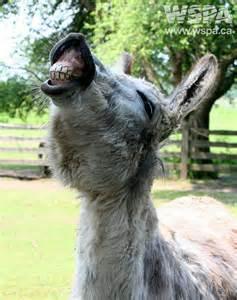 Happy Hump Day Animals