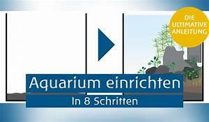 Aquarium Einrichten 60l : aquarium einrichten anleitung ~ Michelbontemps.com Haus und Dekorationen