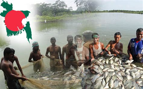 bangladesh fish feed pellet milltwo types  fish farming