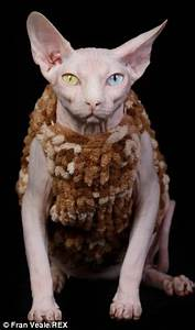 Sphynx cat with no fur has whole wardrobe of jackets to ...