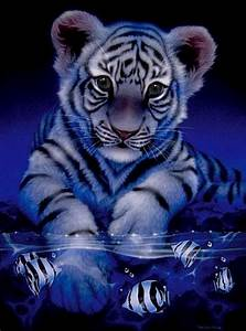 top beautiful animal | top pictures 2011