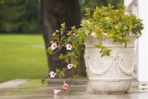 Pflanzen Kübel Beton : attraktive gartengef e aus beton mein bau ~ Markanthonyermac.com Haus und Dekorationen