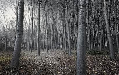 Woods Dark Wallpapers Forest Pixelstalk