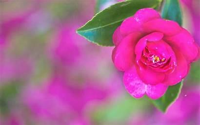 Pretty Desktop Wallpapers Backgrounds Pink Wallpapersafari