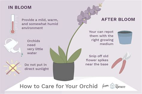 bathroom painting ideas how to care for your orchids