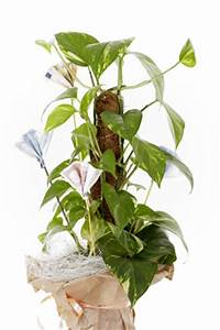 Pflegeleichte Zimmerpflanzen Mit Blüten : pflegeleichte topfpflanzen beliebte pflanzen f r drinnen ~ Sanjose-hotels-ca.com Haus und Dekorationen