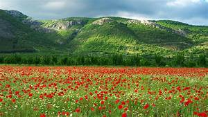 Bulgaria, Scenery, Wallpapers, -, Top, Free, Bulgaria, Scenery, Backgrounds