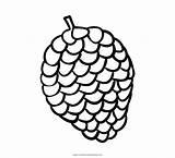 Pine Coloring Cone Pigna Colorare Pinecone Disegni Printable Ultra sketch template