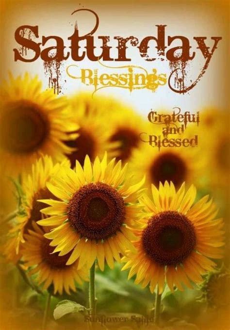 sunflower saturday blessings image pictures