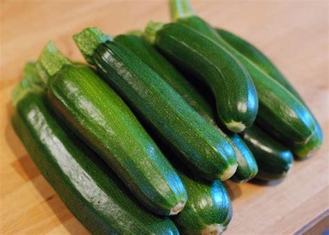 Coltivare Zucchine In Vaso by Guida Alla Coltivazione Delle Zucchine In Vaso Giardini