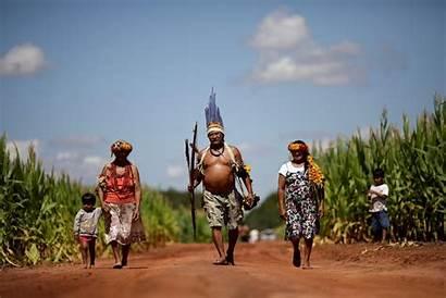 Indigenous Agriculture Brazil Farming Land Commercial Reuters