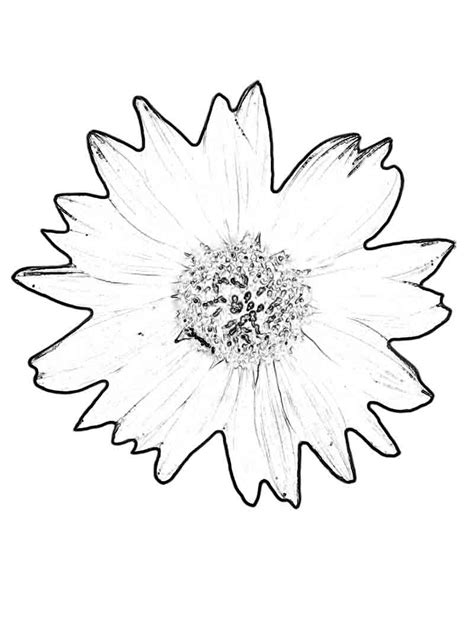 printable sunflower coloring pages  kids