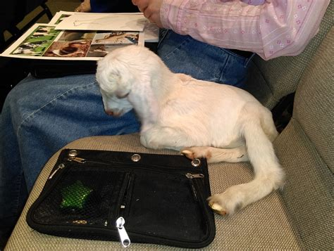 The Suitcase Journals How A Lamb And Jesus Triumphed Over