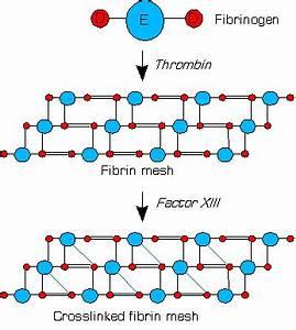 Factor XIII - Wikipedia