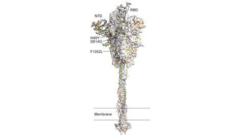 Coronavirus Mutation Concern Verified by Largest COVID-19 ...