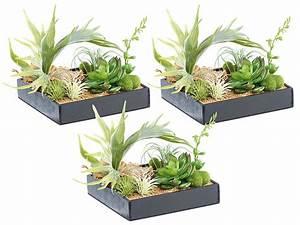 Minigarten Im Glas : tillandsien im glas tillandsien arrangement im viereckigen glas kaufen bei obi tillandsien ~ Eleganceandgraceweddings.com Haus und Dekorationen