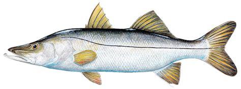 Sportsman Boats Vs Robalo by Top Sportfish Of Florida Florida Sportsman