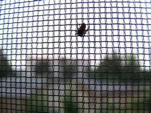 Mückenschutz Für Türen : fliegengitter informationen insektenschutz ~ Cokemachineaccidents.com Haus und Dekorationen