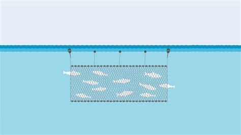 gillnets fishing gear marine stewardship council