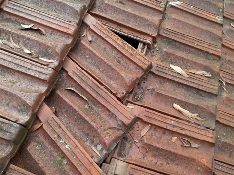 terracotta roof tile cleaning images