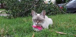 grumpy cat   rival  sauerkraut  moggy