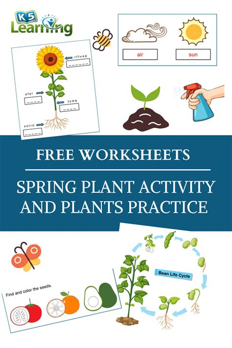 spring plant activity  worksheets  learning