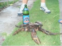 Coconut Crab Trash Can Fishpros Creepy