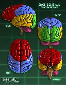 Daz Brain