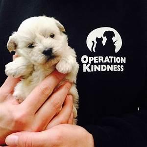 Einverständniserklärung Operation Kind : happy tails society operation kindness ~ Themetempest.com Abrechnung
