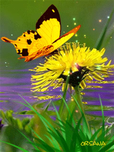 yellow flower  butterfly animated pictures