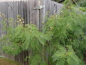Ayahuasca/DMT - re-Legalize All Plants