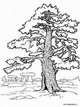 Coloring Tree Oak Pages Printable Trees sketch template