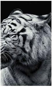 30 Tiger Full 4K, HD, Full HD Wallpaper For Mobile, PC ...