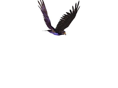 animasi burung gif  gif images